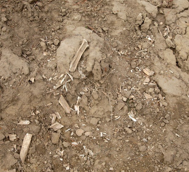 Bones Found and Human Bodies Created; But How?