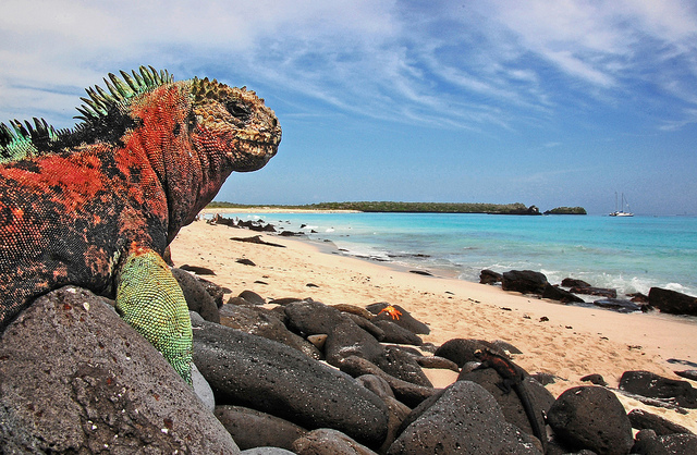 The Galapagos Islands (Image via Flickr)
