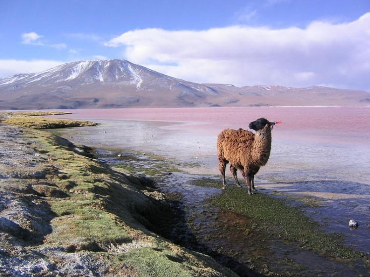 Bolivia (Image by Phil Whitehouse, via Wikipedia)