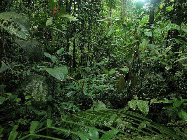 Madidi National Park (Photo by Hanumann)
