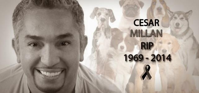 photo of Cesar Milan by noticiasunan