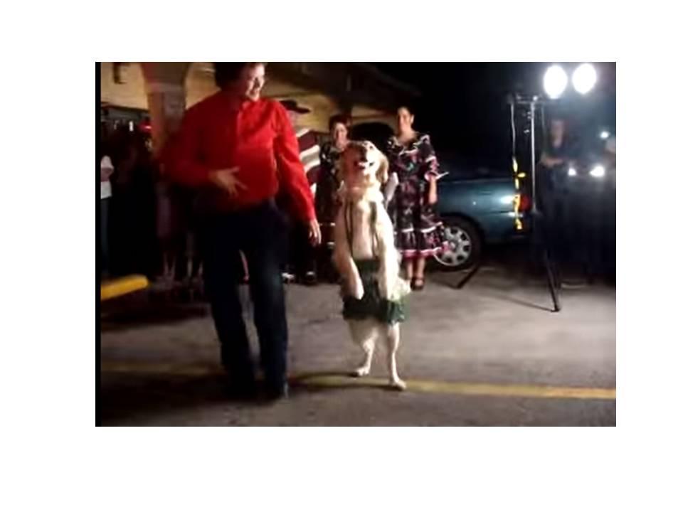 """""""El Perro Bailador"""""""